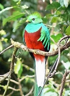 Quetzal Quest